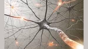 rewire-your-brain-image